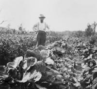 1900s Mr. Beyenka on the Farm